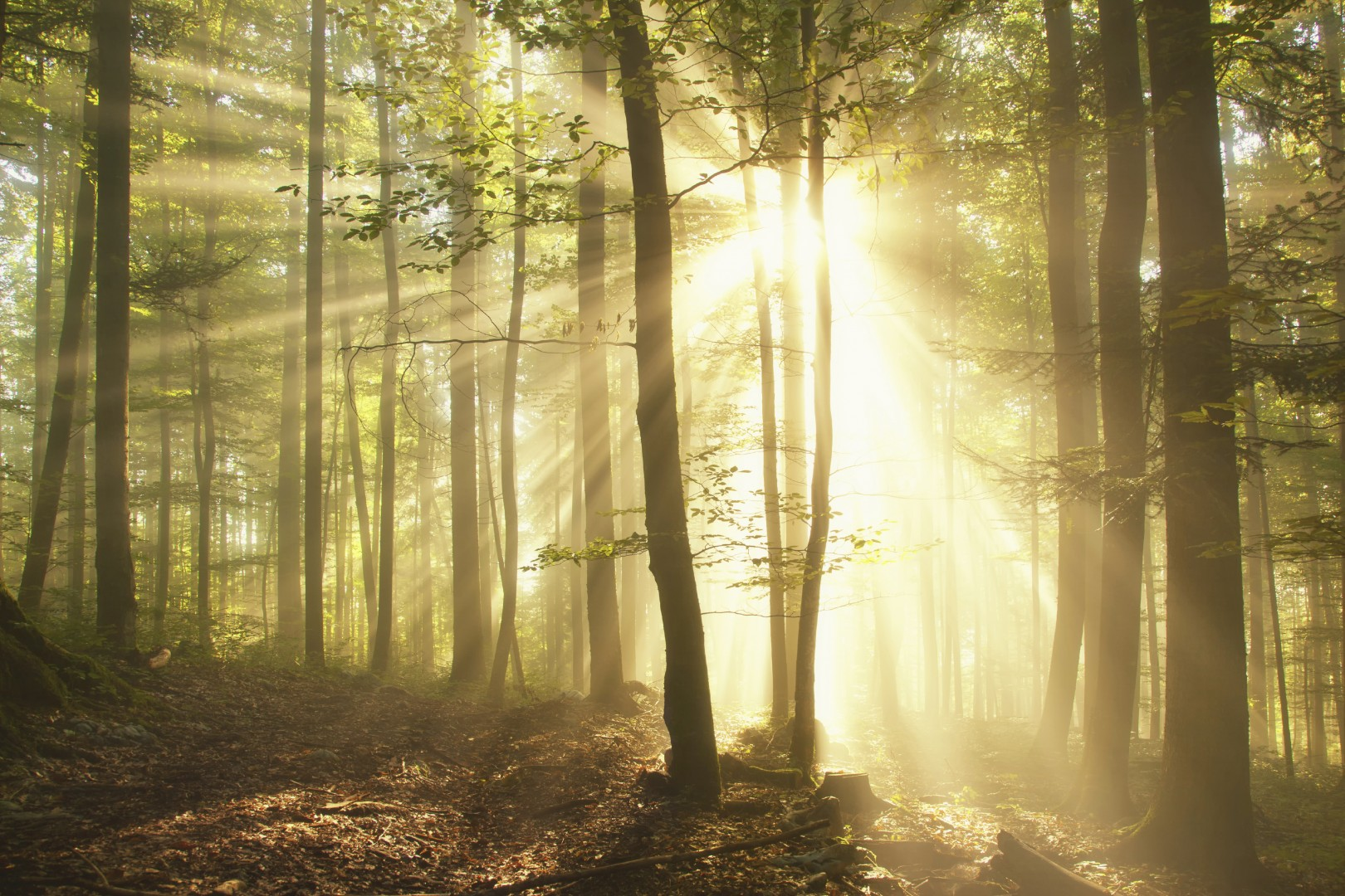 Magic forest with sun ray light.